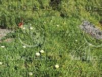 plant bulb flowering.jpg