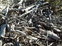 wood pile.jpg