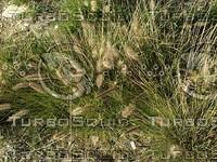 long wild grass.jpg