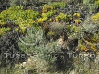 scrubby plants.jpg