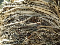 dried stalks plants.jpg