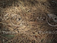 dried pine straw.jpg