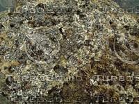 mossy asphalt detail.jpg