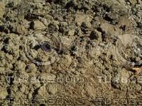 clumpy ground detail.jpg