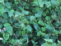 green plant detail.jpg