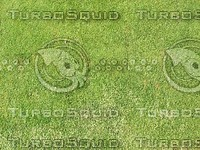 green grass.jpg