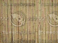 bamboo sticks plant.jpg