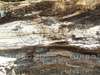 decaying wood log.jpg