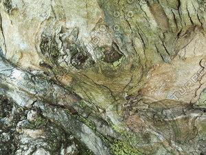 tree bark wood.jpg