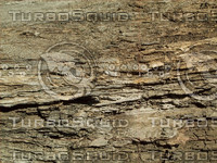 tree bark wood.jpg