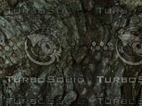 tree bark plant.jpg