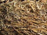 straw hay plant.jpg