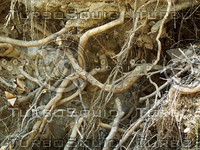 gnarled roots plant.jpg