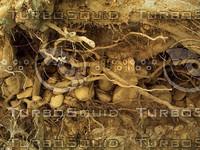 roots ground.jpg