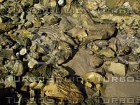 greenish rocks sandy.jpg