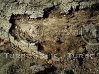natural wood bark.jpg