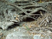 gnarled wood roots.jpg
