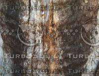 weathered wood bark.jpg