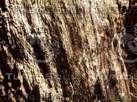 wood bark.jpg
