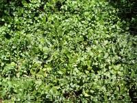 foliage 9.jpg