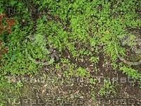 ground plants.jpg