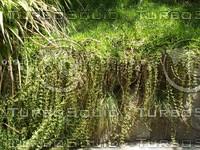river bank plant.jpg