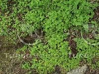 small plants.jpg