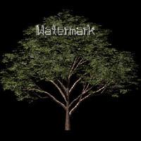 tree1_sprite.tif