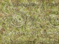 Grass001.jpg