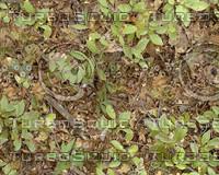 Leaves003.jpg