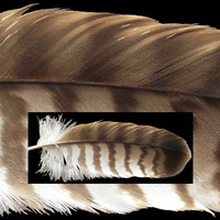 feather1951.tif