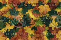 leaves-25.jpg