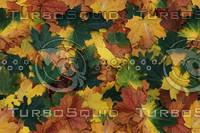 leaves-25.bmp