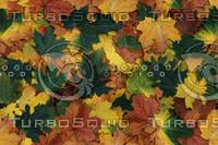 leaves-75.jpg