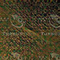 skin alien AA22421.jpg