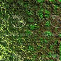 nature shell AA34743.jpg