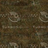 DinoColor.jpg