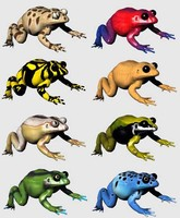 Frogs.zip