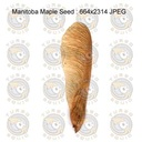 SPT_MapleSeed001