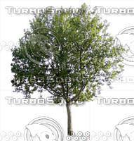 Tree-1.zip