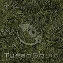 dp_grass.jpg