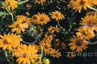 flora-72.jpg