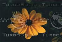flora3-72.jpg