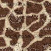 giraffe256.jpg