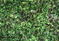grasssaladlgt.jpg