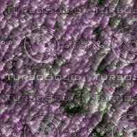 purple_chenille256.jpg