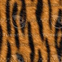 tiger256.jpg