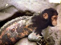 Monkey lizard.jpg