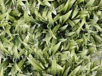 SPT_LeafyPlants001