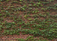 brick0008.jpg